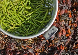Wedgwood wild food foraging experience @ Wedgwood the Restaurant