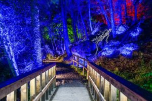 The Enchanted Forest: COSMOS @ Faskally Woods